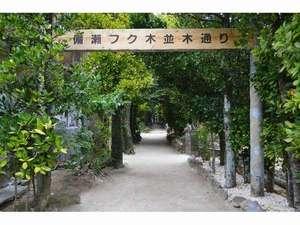 備瀬のフクギ並木―ホテルから徒歩3分。朝の散歩に最適です。