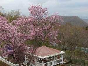 オーベルジュ北の暖暖:ガーデンの桜