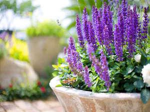 サンピアセリーズ:春が待ち遠しい!ガーデニングは春になるとお花がいっぱい!