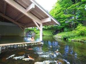 雫石プリンスホテル:【雫石高倉温泉(夏)】錦鯉が泳ぐ池と隣接している露天風呂