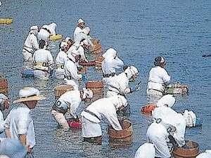 【風の島 菅島】民宿旅館 磯の味 なこら:海女の祭典★菅島しろんご祭り(7月初旬に開催)