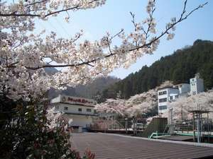 当館も、春は桜に囲まれます!2012年の桜の見頃は4月7日~♪
