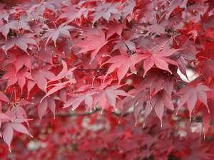 客室からの紅葉写真です。