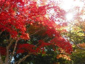 旅館 奥村宗助(大峯山 洞川温泉):秋の彩り