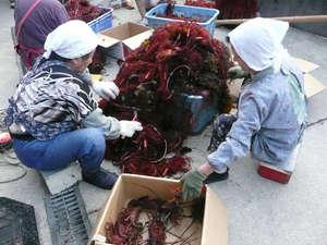 休暇村 南伊豆:【秋】南伊豆町内では9月中旬より伊勢海老漁が解禁となります。