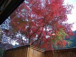 館内より見られる紅葉