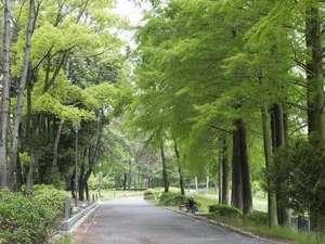 南千里クリスタルホテル:目の前には、千里南公園の緑豊かな景色が広がっています。  ジョギングコースにオススメです!