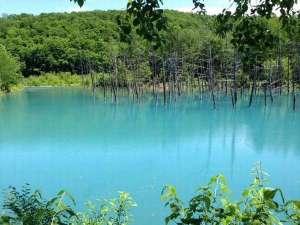 ニュー富良野ホテル:美瑛白金青い池