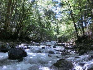 ユウキトカリ:目の前を流れる道志川。天気が良ければ絵ハガキのようです