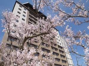 地元の方に愛される高山桜庵の敷地で咲き誇る2本の桜☆花見が出来る足湯でリラックス