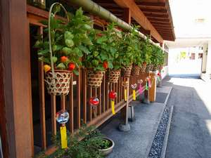 【その他】伊香保温泉の夏は商店や旅館の軒先に飾られたほおずきのお出迎えが風物詩です。