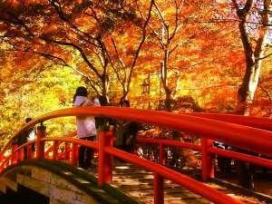 伊香保にある「河鹿橋」は、秋になると紅葉が楽しめる名所です。紅葉の時期にあわせライトアップされます♪
