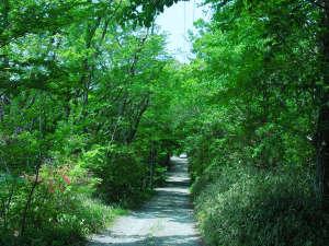 西絆荘:西絆荘への入り口の道です。コンクリートの公道に面していないので、自然が満喫できます。