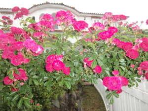 四季折々のお花が周辺にも咲きます。