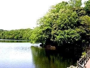 伊豆一碧湖 レイクサイドテラス(旧:紀州鉄道 伊豆一碧湖ホテル):新緑の一碧湖(イメージ)