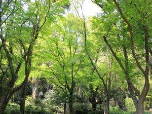 ■四千坪の庭園■5、6月は新緑が綺麗!森林浴を楽しめます♪