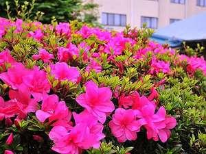 伊豆 網代温泉 松風苑:■四千坪の庭園■ 庭園に咲くつつじ 5月~6月が見ごろです