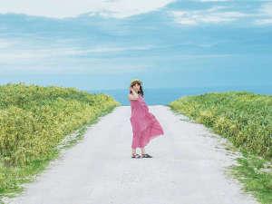"""■白い道■SNS映え抜群!青・緑・白のコントラスト◎約3㎞にわたる""""ホタテの貝殻""""で出来た道"""