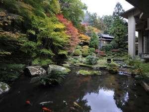 三朝温泉 依山楼岩崎:【依水園】秋の依水苑。紅葉の時期が一番の見頃。
