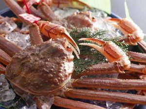 三朝温泉 依山楼岩崎:山陰の冬を代表する味覚 松葉蟹。 淡白で上品な甘さそして繊細な味わい