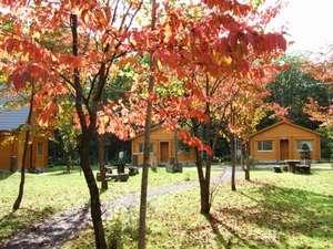 マウレ山荘:【温泉付コテージ】秋の様子