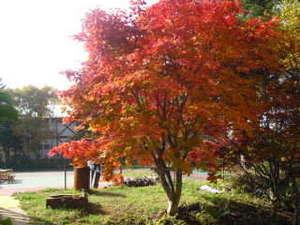 ペンション白いつばさ:自慢の当館庭の紅葉を眺めBBQも最高!(10/20~28日が見頃)