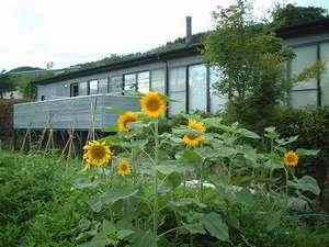農家民宿 Homey inn えんや:夏の外観