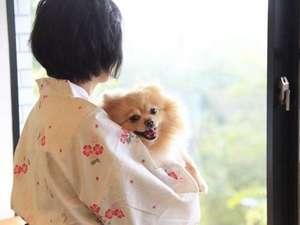 犬御殿 箱根仙石原温泉 森のあかり:お部屋からの眺めも旅のお楽しみです。浴衣でのんびり