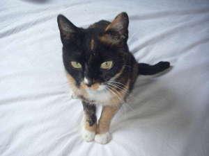 伊豆大島 民宿三喜:ネコのみーちゃん。メスです。人見知りでなかなかお客さんには近づきません。(^^ゞ