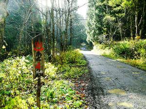 間欠泉 湯の華:秘湯までのあと4km!自然の美しさに魅了される山道は、多少不便ながらこれも旅の思い出