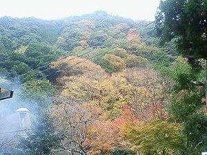 犬鳴山いこいの家:カフェテラスから見る紅葉。