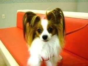 湯の川温泉 ホテル雨宮館:常連犬のパピちゃん♪