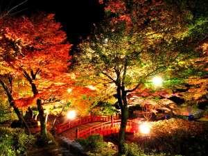 熱海梅園もみじ祭りの期間中は夜間のライトアップイベントも。