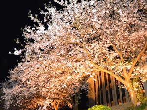 休暇村 紀州加太(きゅうかむら きしゅうかだ):期間中さくらライトアップ(さくら館前)
