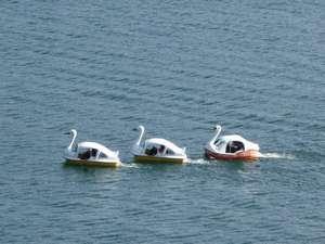 富士と湖を望む絶景宿 グリーンレイク:白鳥ボート