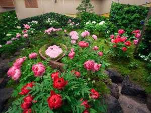【由志園:冬】一年中牡丹の花が楽しめる。もちろん、冬もご覧頂けます