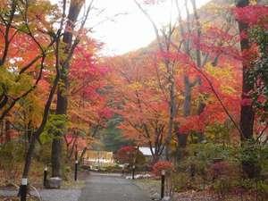 湯けむりの里 柏屋:庭園・四季の森 (秋イメージ)