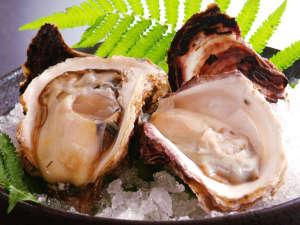 丹後温泉 はしうど荘:夏に旬を迎える岩牡蠣。当館の岩牡蠣は大きく濃厚です