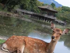 ホテルフジタ奈良:浮身堂(うきみどう)、ホテルから徒歩15分です。ライトアップされると綺麗ですよ。