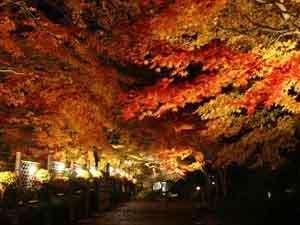 ホテルサンバレー富士見:幻想的な修善寺 虹の郷の紅葉ライトアップ(11/17~12/3日付指定あり)