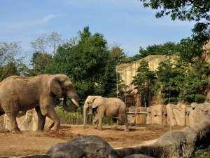 【セルコホーム ズーパラダイス八木山 車で約40分】仙台市八木山動物公園です。隣りは遊園地だゾウ!