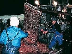 割烹旅館 西山:由比港でしか捕れない桜海老を堪能