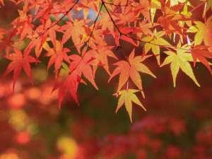 京都タワーホテル:11月中旬~12月初旬は紅葉狩りにぴったり☆夜間拝観を行う寺社仏閣も多いので1日中楽しめます。