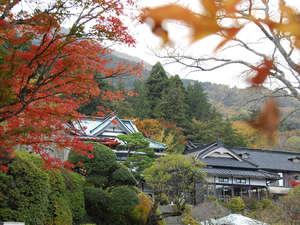箱根小涌谷温泉 三河屋旅館:紅葉の季節の外観