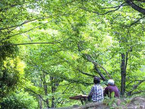 越前糸生温泉 泰澄の杜:ゆったり緑を眺めながら・・・・!