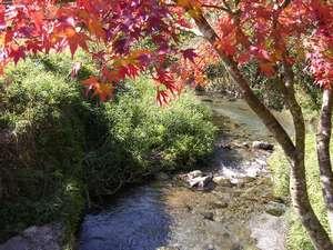 旅の宿 阿蘇乃湯:【池山水源】日本の名水100選に選定された。豊富な水量に恵まれた上質な湧水を持ち帰る人も多い/一例