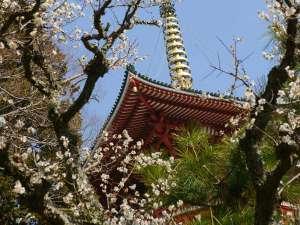 成田山新勝寺の梅