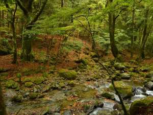 10月31日☆天城山隧道(天城トンネル付近)☆紅葉もキレイですが、地面の赤さが印象的♪幻想的な美しさ!