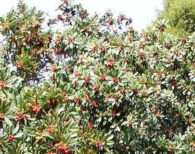 ホテルオレンジ:オレンジ園で採れた旬の果物を味わえます☆