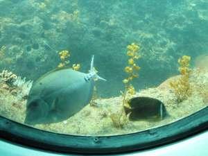 ホテルオレンジ:ファミリーおすすめ足摺海底館
